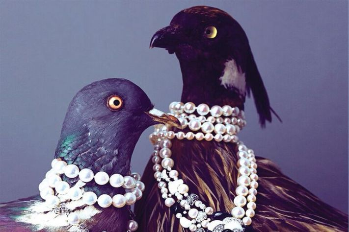 5 Top Jewels on the Fly (slideshow)